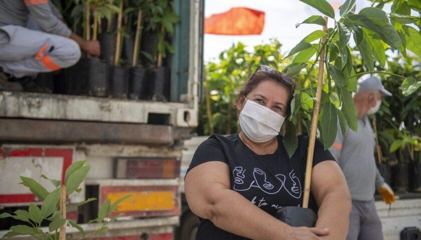 Büyükşehir'den üreticilere 3 bin 250 avokado fidanı