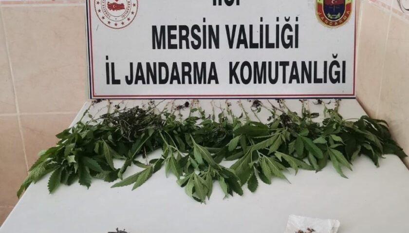 Mersin'de 31 kök kenevir bitkisi ele geçirildi
