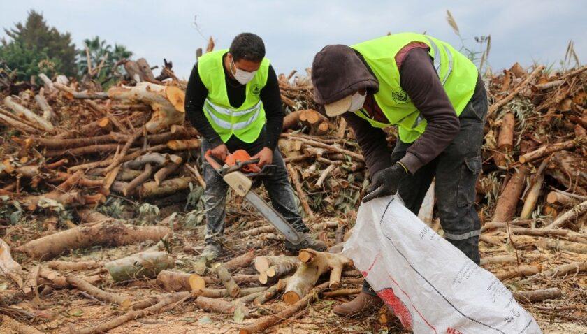 Budamadan elde edilen odunlar, ihtiyaç sahiplerine ulaştırılıyor