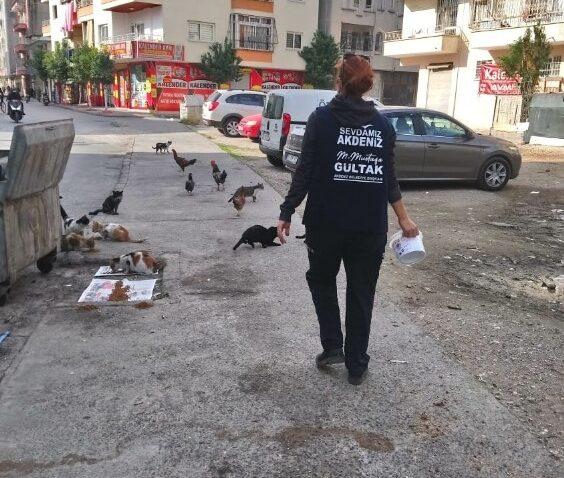 Kısıtlamada, sokakta yaşayan canlılar unutulmadı