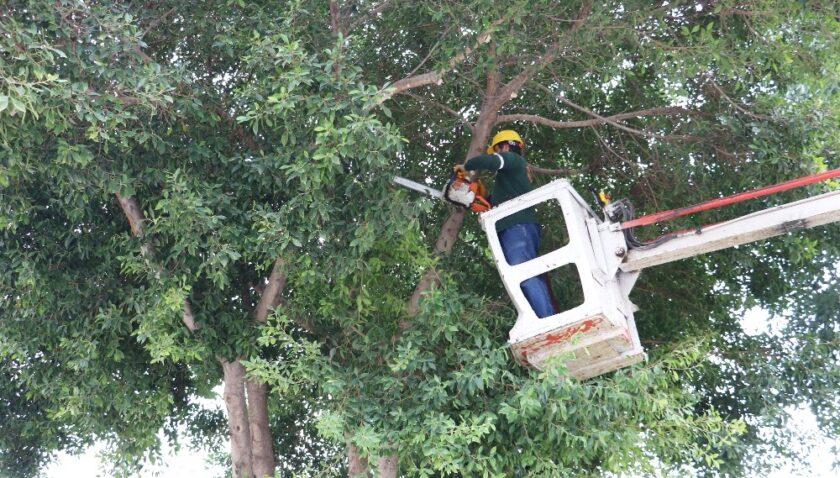 Toroslar'da ağaçlar budanıyor