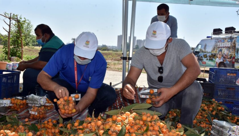 Tarsus Belediyesi, 12 ton yenidünyayı vatandaşlara ücretsiz dağıttı