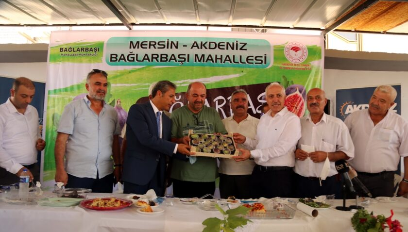 Akdeniz'de 'siyah incir' hasadı başladı