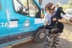 Akdeniz Belediyesi yangından etkilenen hayvanların ihtiyaçlarını karşıladı